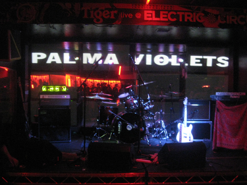 Palma-violets10